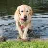 Trixie dog activity mot-fun aqua speelgoed drijvend rood